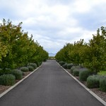 driveways torquay
